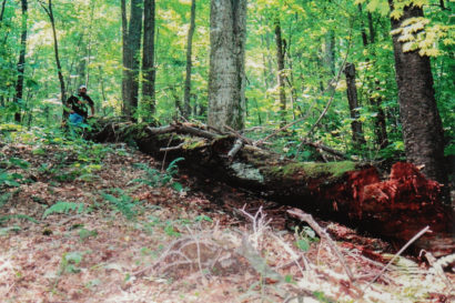 Chestnut Ghost Log In The Appalachian Mountains