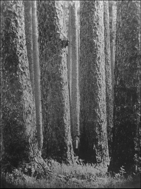 Longleaf Lumber 5 Expert Tips For Buying Heart Pine Flooring