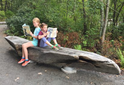 Salvaged Live Oak Bench At Walden Pond, Concord, MA